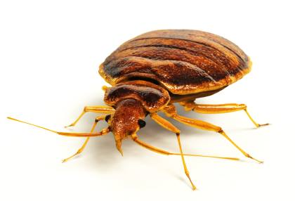 Bed bug extermination by On The Go Services, LLC